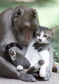 Monkey with cat